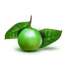 photo realistic alibertia edulis 3d fruit vector image