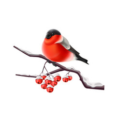 realistic bullfinch bird at branch xmas vector image