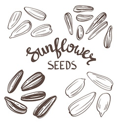 Set of Sunflower seeds with Vintage Stylized vector image