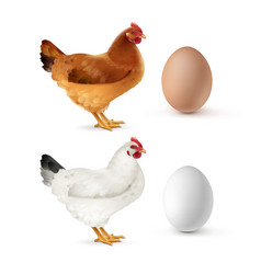 brown and white hen with vector image