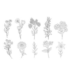 Hand drawn medical herbs line drawing plants vector