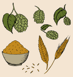 hops and malt set vector image