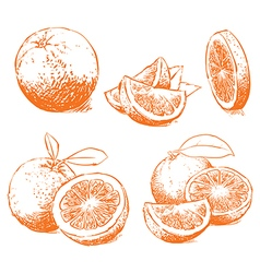 Orange isolated vector