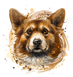 pembroke welsh corgi graphic colored hand-drawn vector image