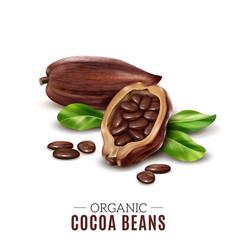 Realistic cocoa composition vector