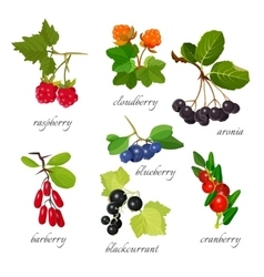 Set of berries with leaves botanical vector