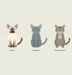 3 cats vector image
