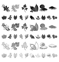 herb and spices cartoon icons in set collection vector image