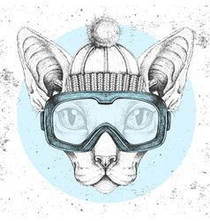 Hipster animal sphynx cat in winter hat and vector