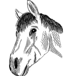 Horse portrait vector