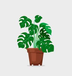 Plant indoor monstera deliciosa in cartoon style vector