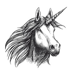 unicorn horse sketch fairy tale animal head vector image