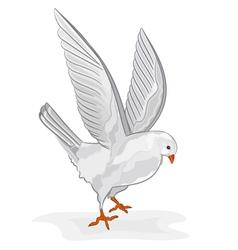 White pigeon in flight wite dove symbol peace vector image