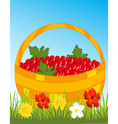 basket with berry vector image