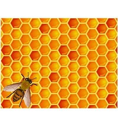 bee with honeycomb vector image