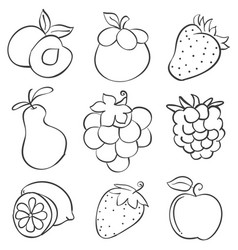 Doodle of fruit design hand draw vector