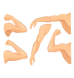 muscle hands male power body muscles strong vector image