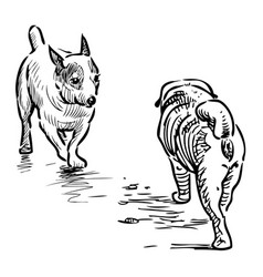 Outline drawing two lap dogs meeting on a walk vector