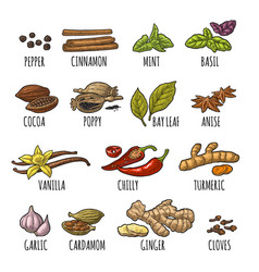 set spices vintage engraved vector image