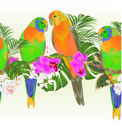 Tropical border seamless background sun conure vector