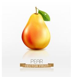Pear isolated on white background vector