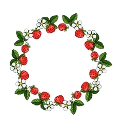 Beautiful strawberries composition wreath vector