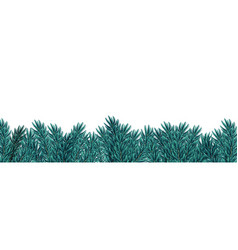 Christmas blue fir tree branches on white vector