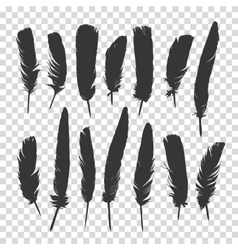 Hand drawn feathers set a transparent background vector image