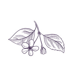 Drawing branch aapple tree vector