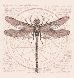 Drawing of dragonfly on an abstract background vector