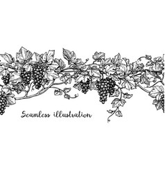 Seamless grapevine sketch vector