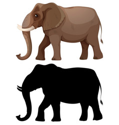 set of elephant character vector image