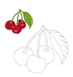 Educational game coloring book cherry fruit vector