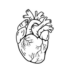 Heart real shape line symbol style vector