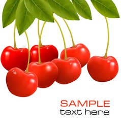 Juicy ripe cherries vector