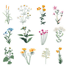 Plants and herbs wild vegetation and botany bloom vector