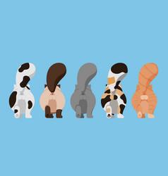 set variety cute cat butt vector image