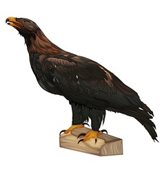 Wedge-tailed Eagle vector