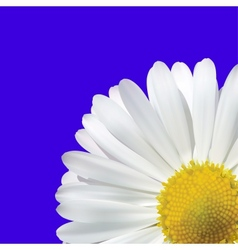 Daisy Flower On A Blue Background vector image