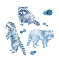 3 hand drawn raccoons vector image vector image