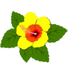 beautiful red hibiscus flowers with leaves vector image