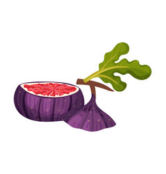 Fig fruit with cut top piece showing bright flesh vector
