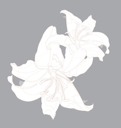 lily design vector image