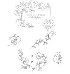 Line drawing orchid flower wreaths frames vector