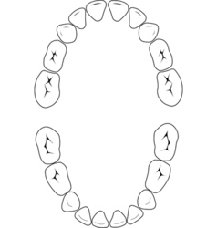 Primary teeth vector