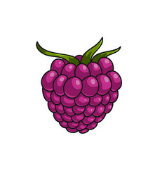 raspberry berry icon vector image