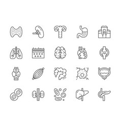 set human organs line icons spleen stomach vector image