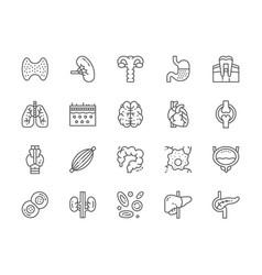 Set human organs line icons spleen stomach vector