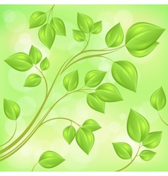 Spring branch with fresh vector image