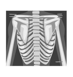 X-ray film spine image vector